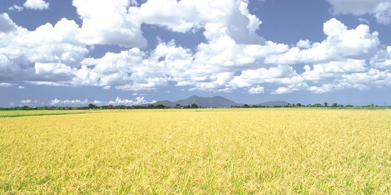 米のりの特徴と強度について